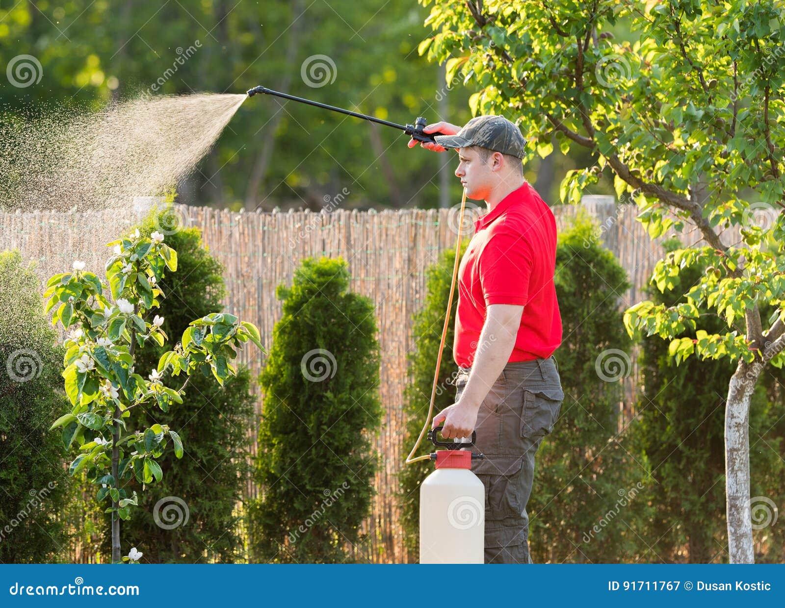 应用杀虫药肥料的花匠于他的果子灌木