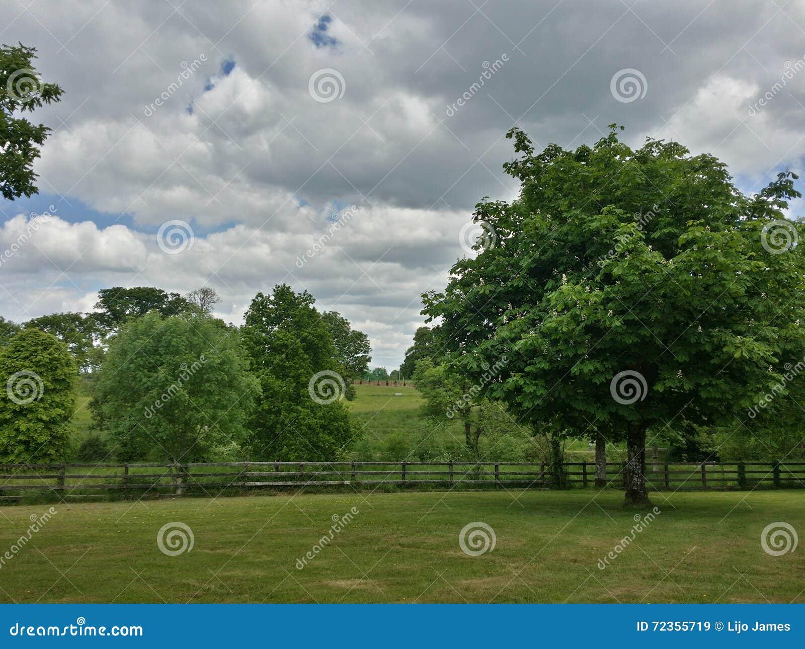 底部照片点天空结构树