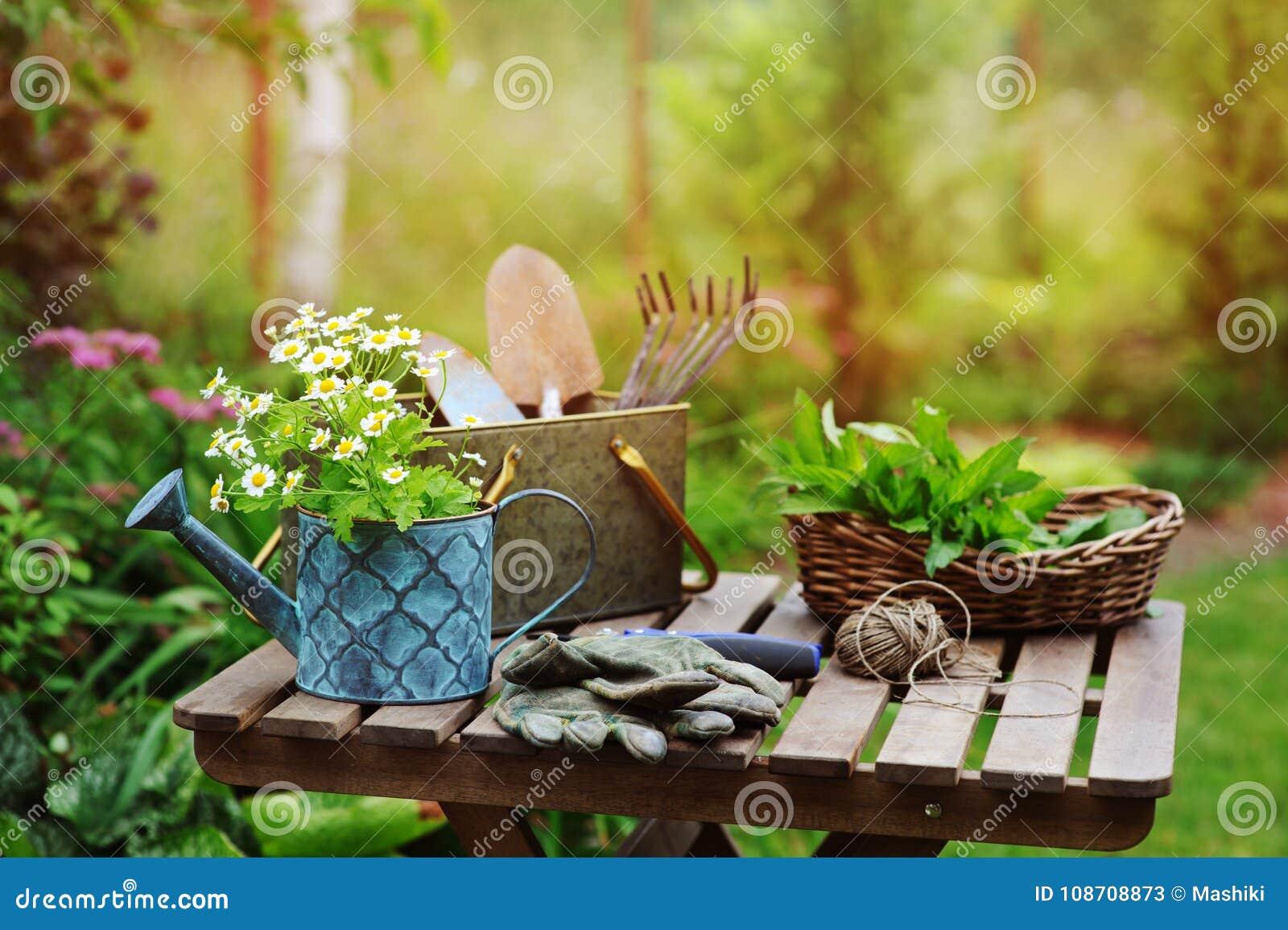 庭院工作静物画在夏天 春黄菊花、手套和工具在室外木的桌上
