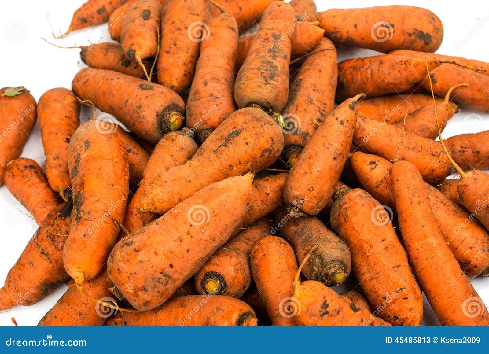 从庭院的新鲜的被收获的红萝卜