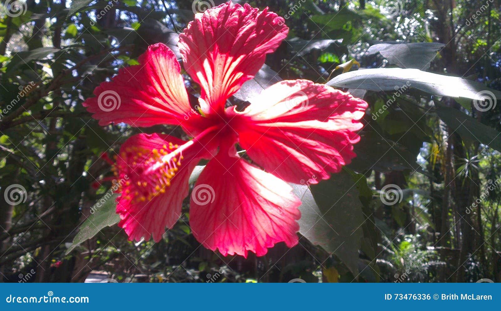 庭院花红色