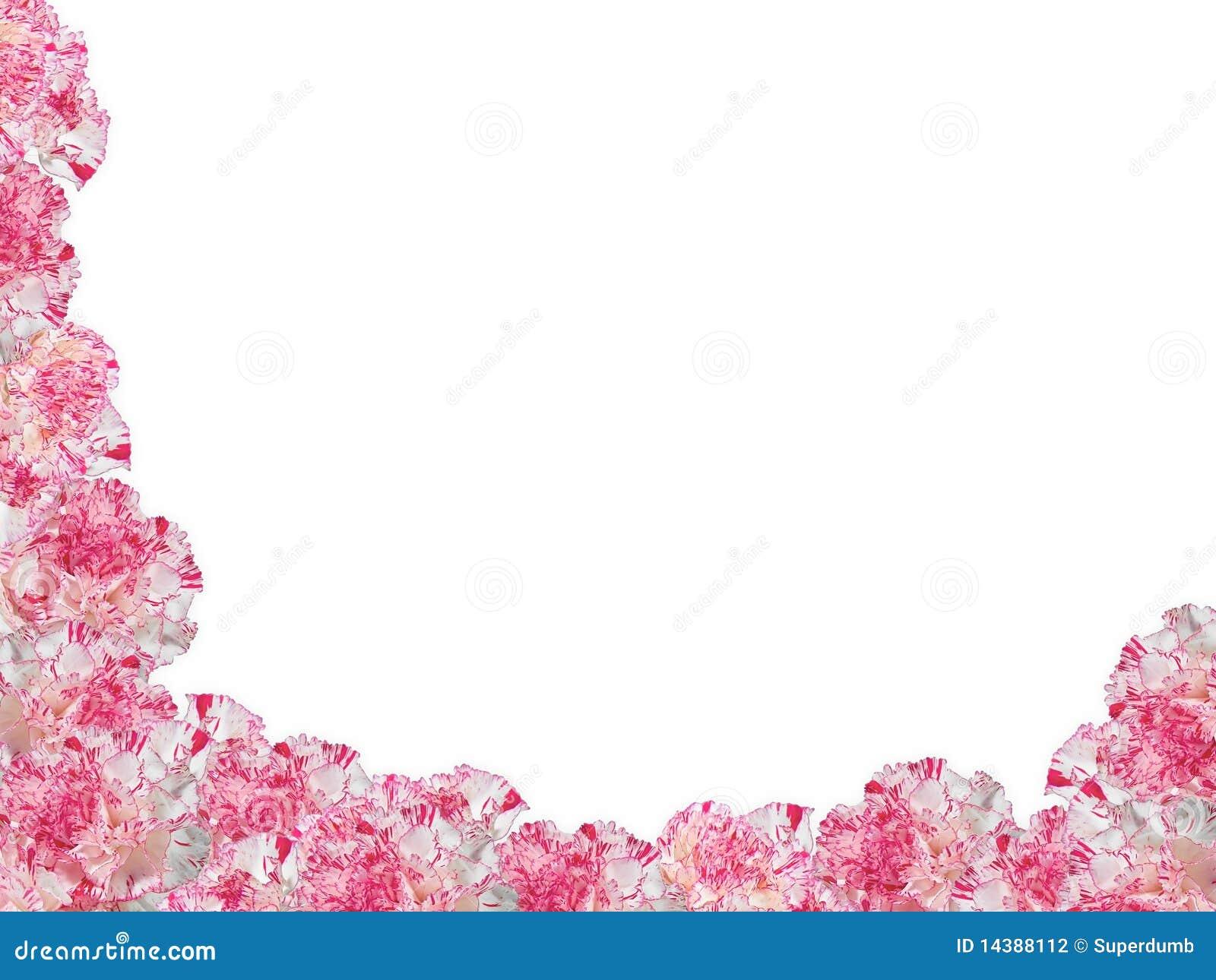 康乃馨构成杂色 图库摄影 图片 14388112