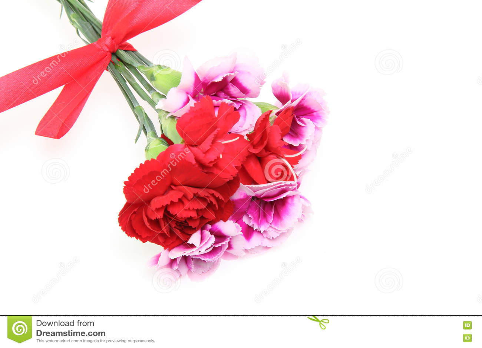 康乃馨花束与丝带的