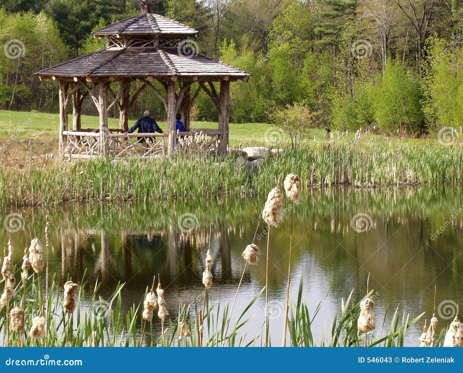 Download 延迟池塘夏天 库存图片. 图片 包括有 叶子, ,并且, 夏天, 眺望台, 池塘, 香蒲, 反射性, 英国, 人们 - 546043