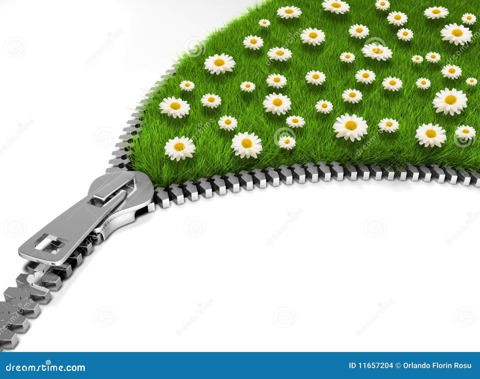 开放域的花