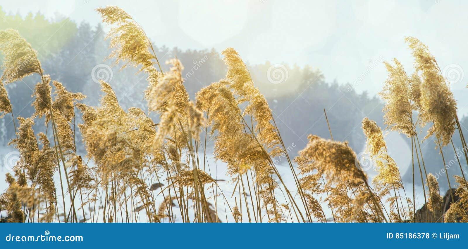 开花在冬天季节的干草甸