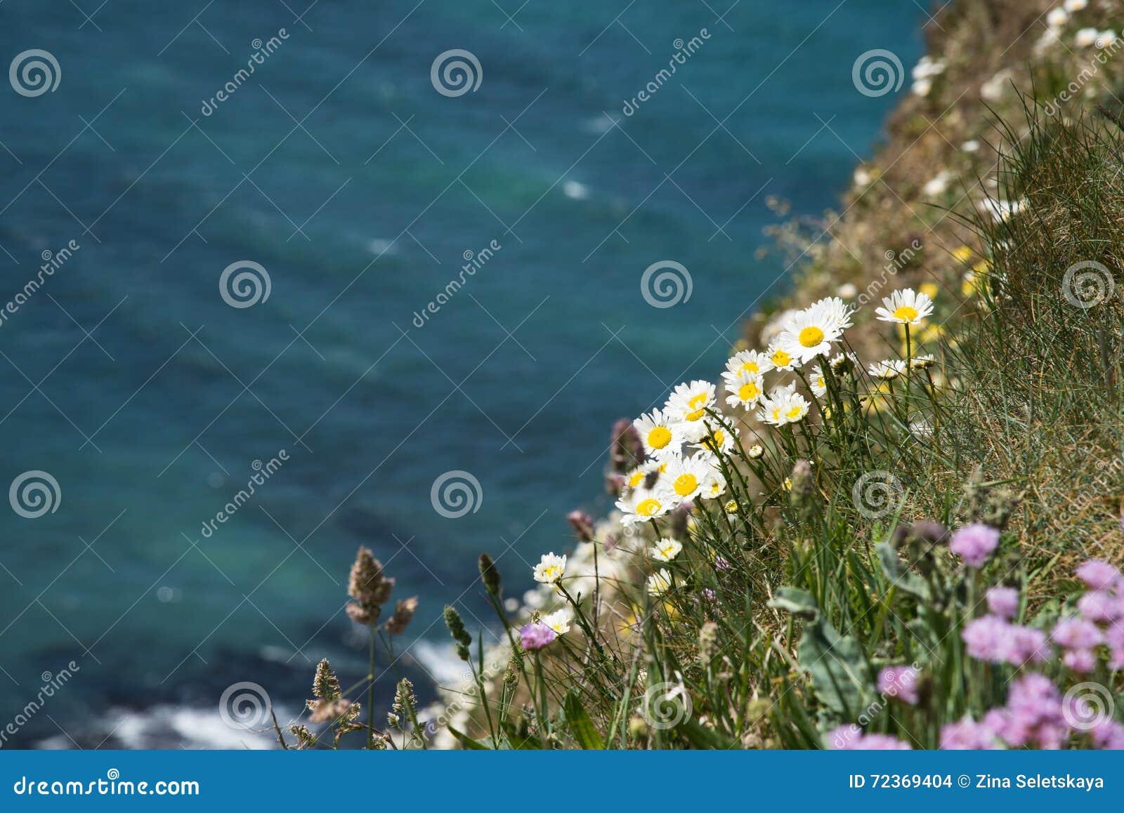 开花在海洋的峭壁的野花