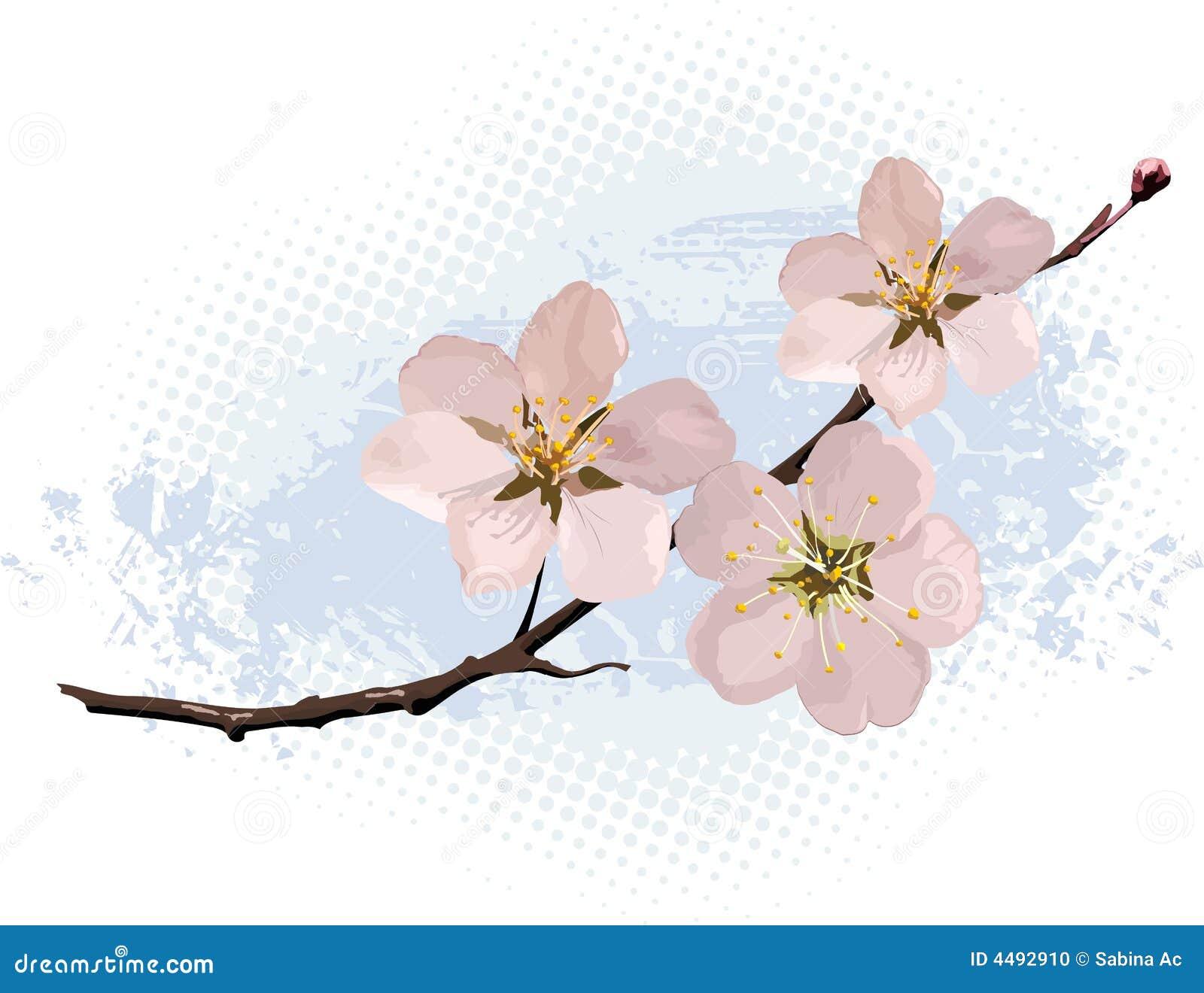 开花樱桃粉红色
