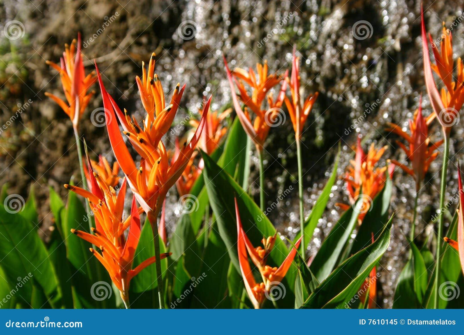 开花橙色热带