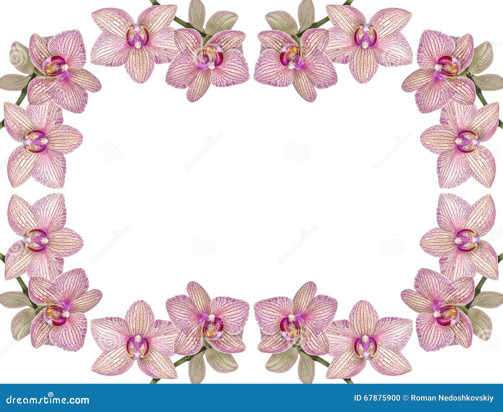 开花的兰花背景