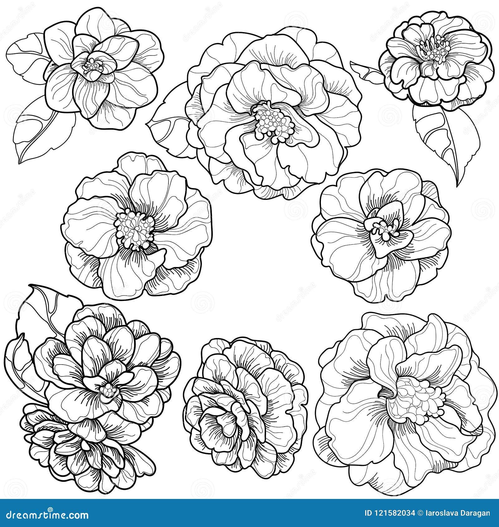 开花的山茶花的方形的装饰品图片