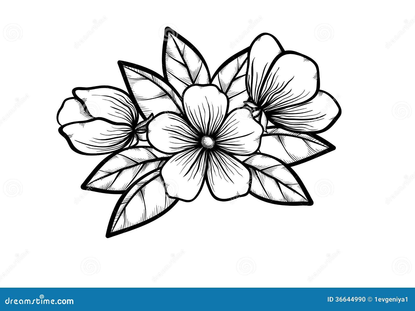 开花的树分支在图表黑白色样式的,用手画。春天的标志