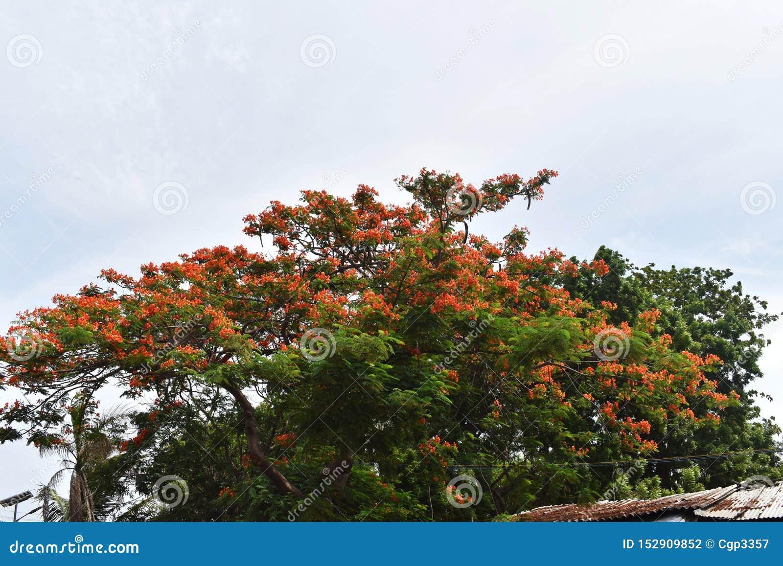 开花的树和天空