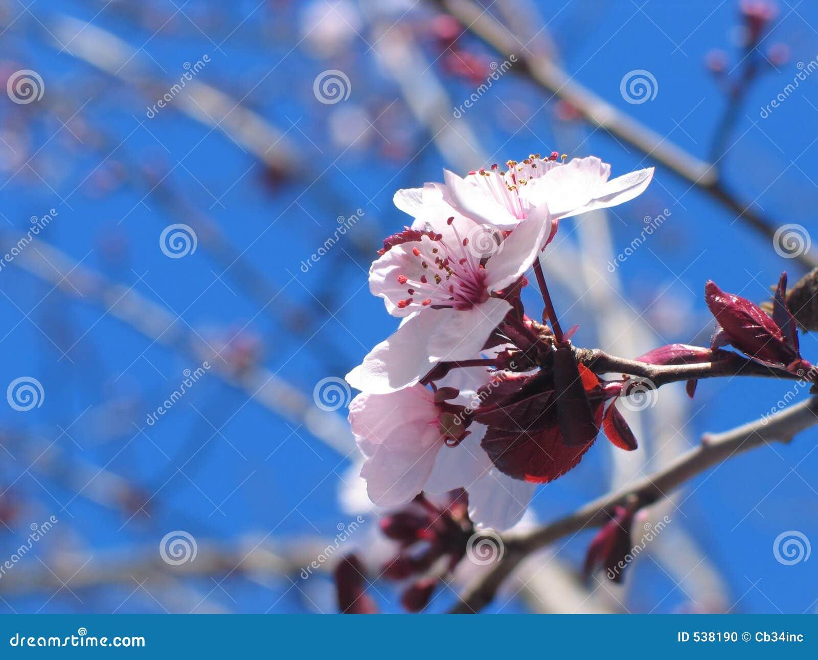 Download 开花的花粉红色 库存照片. 图片 包括有 开花的, beautifuler, brander, 红色, 工厂 - 538190