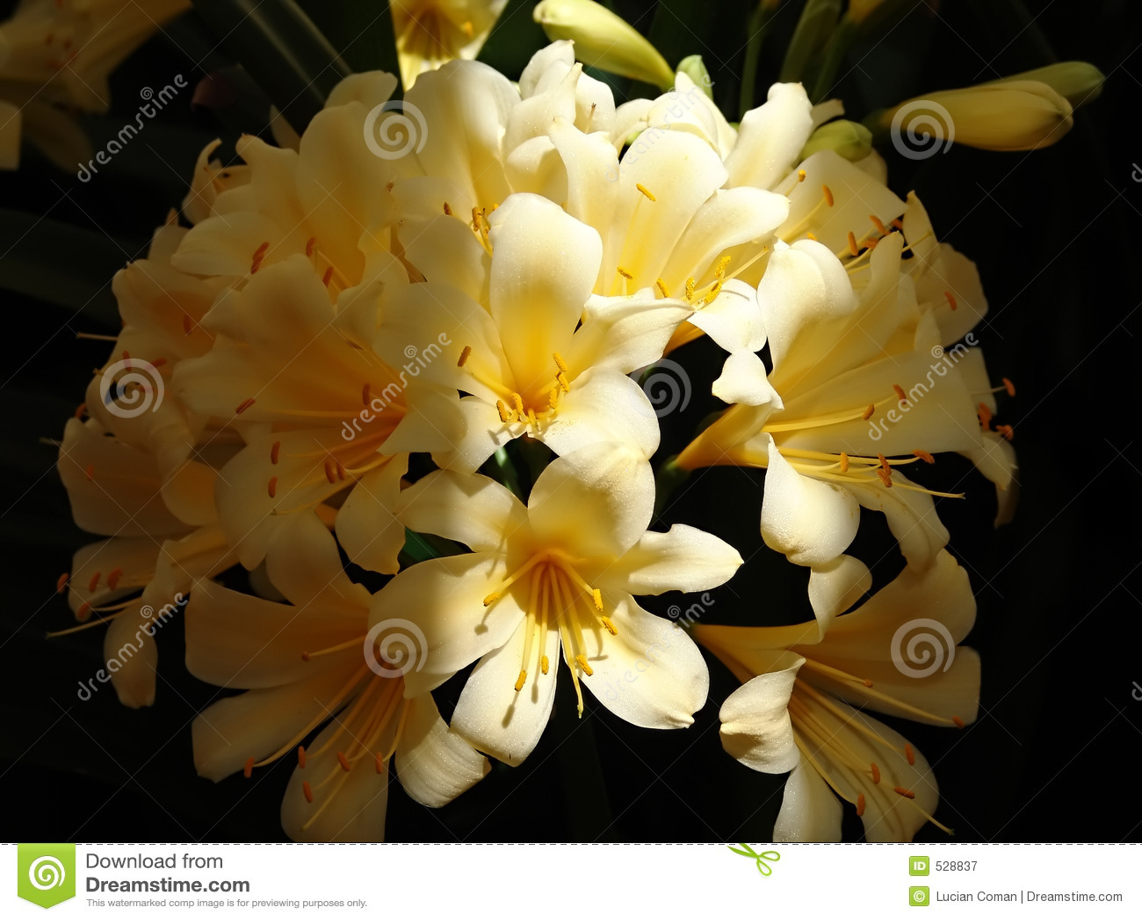 Download 开花的花黄色 库存图片. 图片 包括有 投反对票, 详细资料, 黄色, 弄脏, 工厂, 用花装饰, 雄芯花蕊 - 528837
