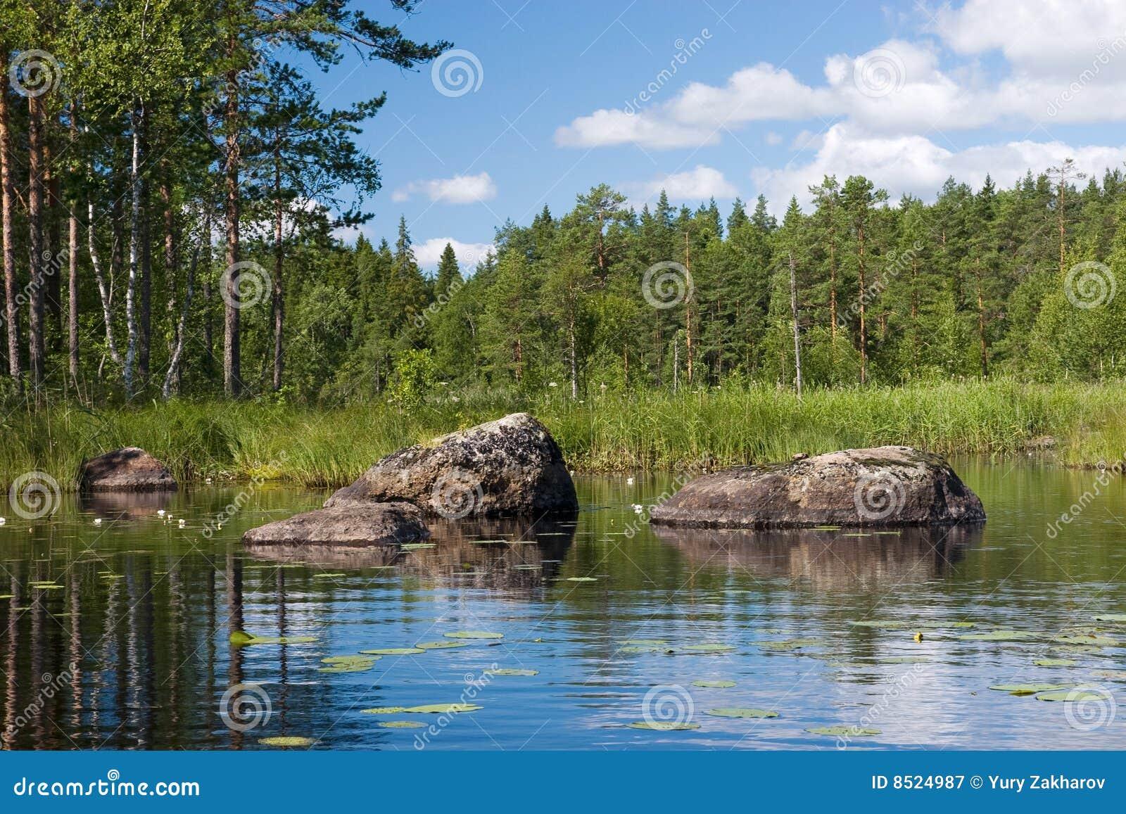 开花石森林的湖图片