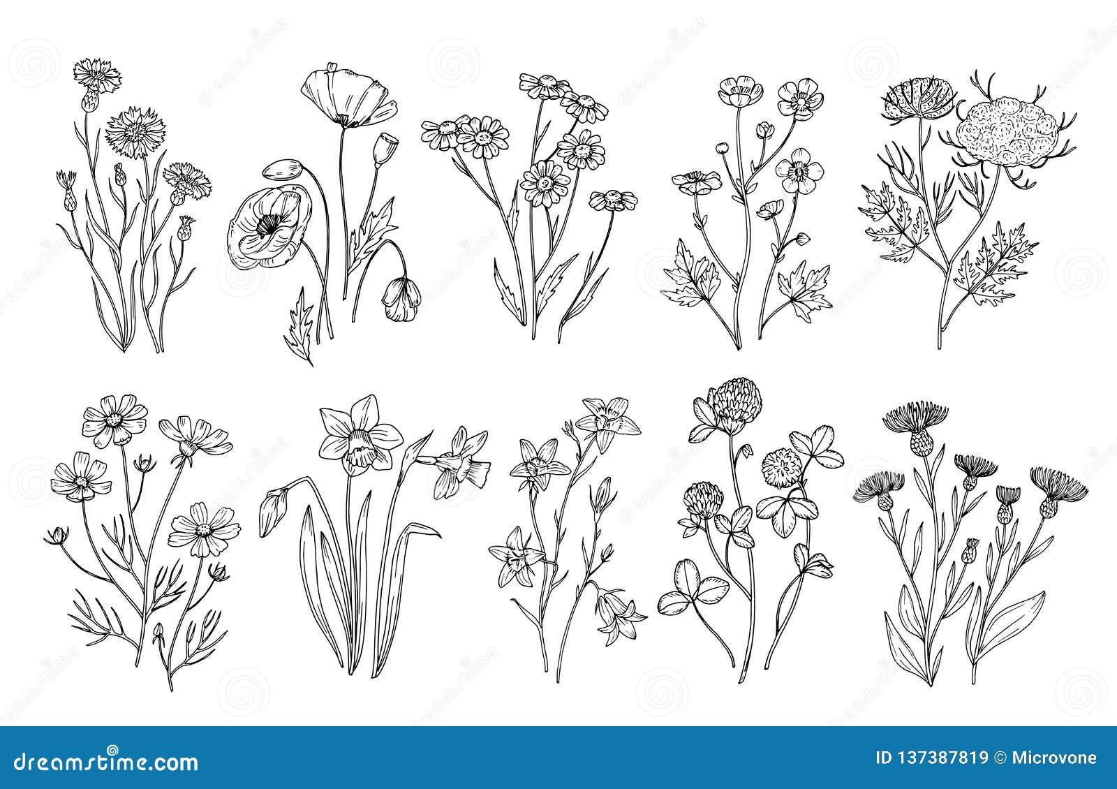 开花通配 剪影野花和草本自然植物的元素 手拉的夏天领域开花的传染媒介集合