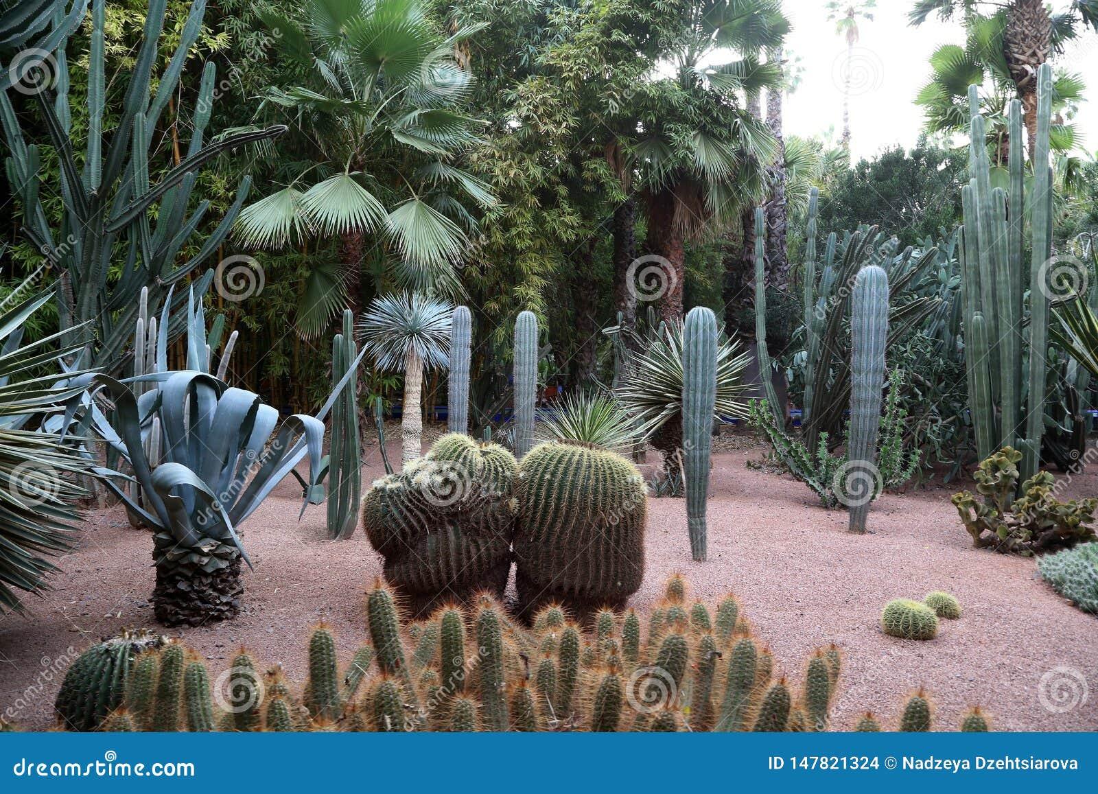 异乎寻常的植物在Majorelle庭院里