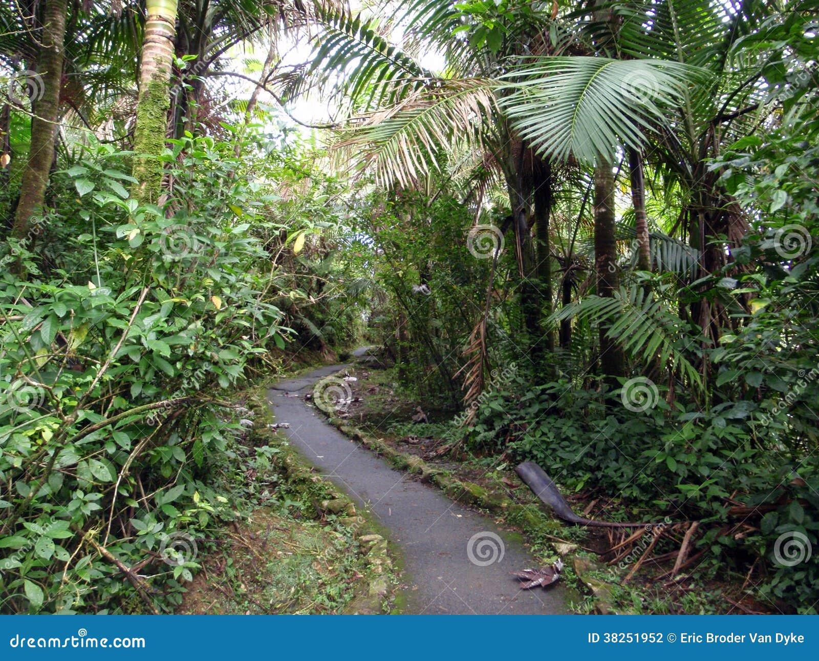弯曲的道路在热带森林里