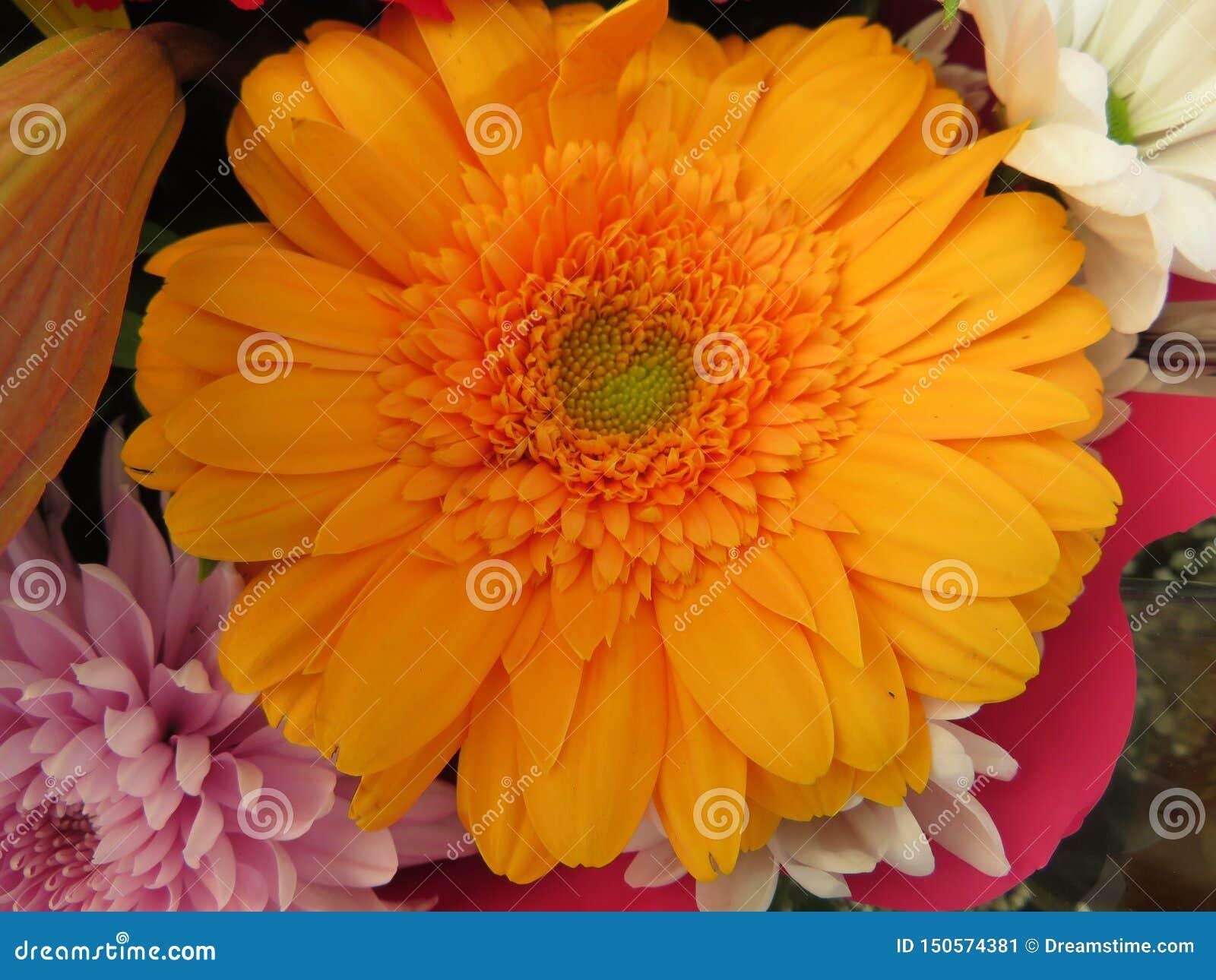 强烈的颜色美丽的花和巨大秀丽
