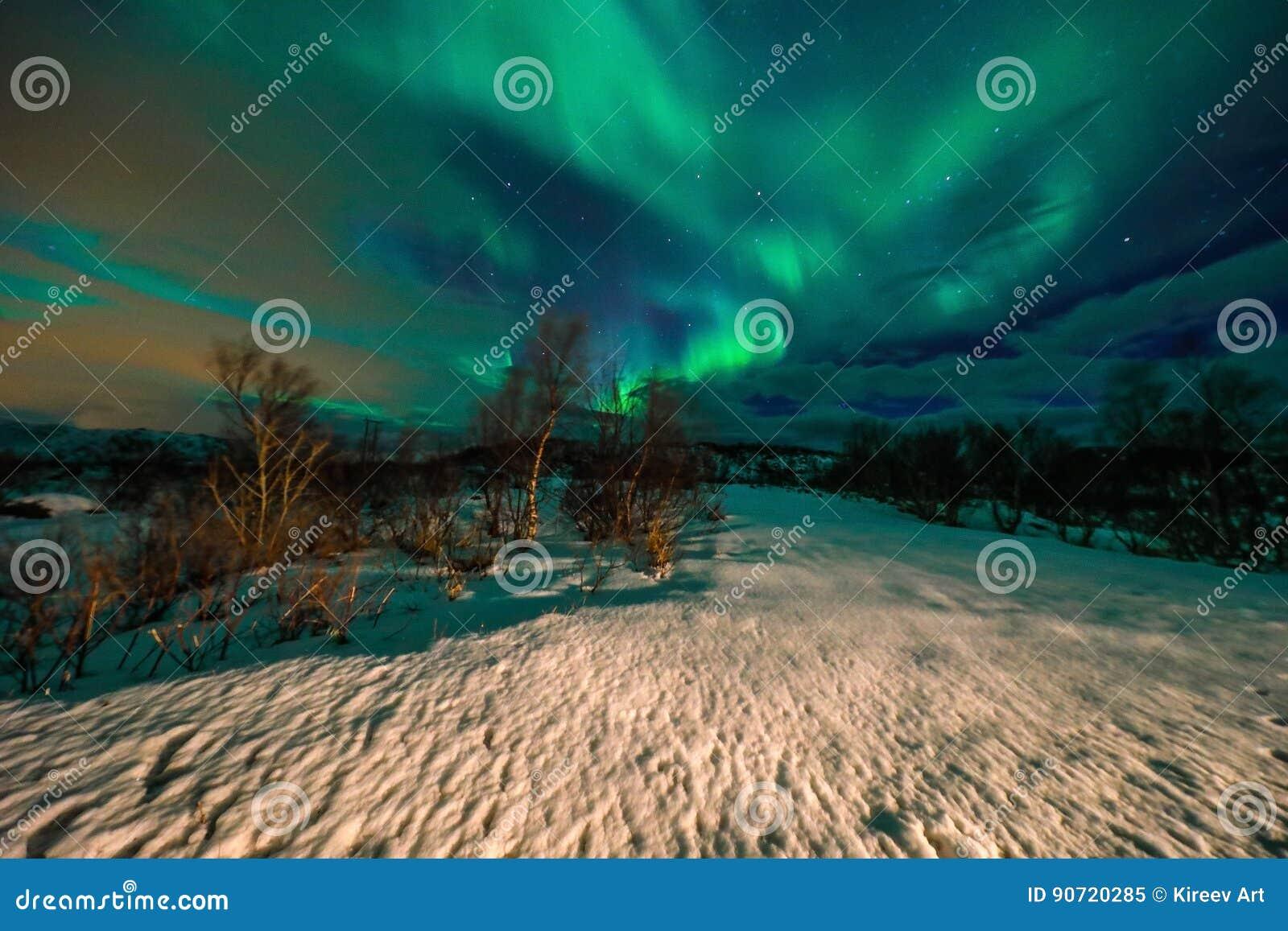 当在夜空的北极光在Lofoten环境美化,惊人的多彩多姿的极光Borealis也知道