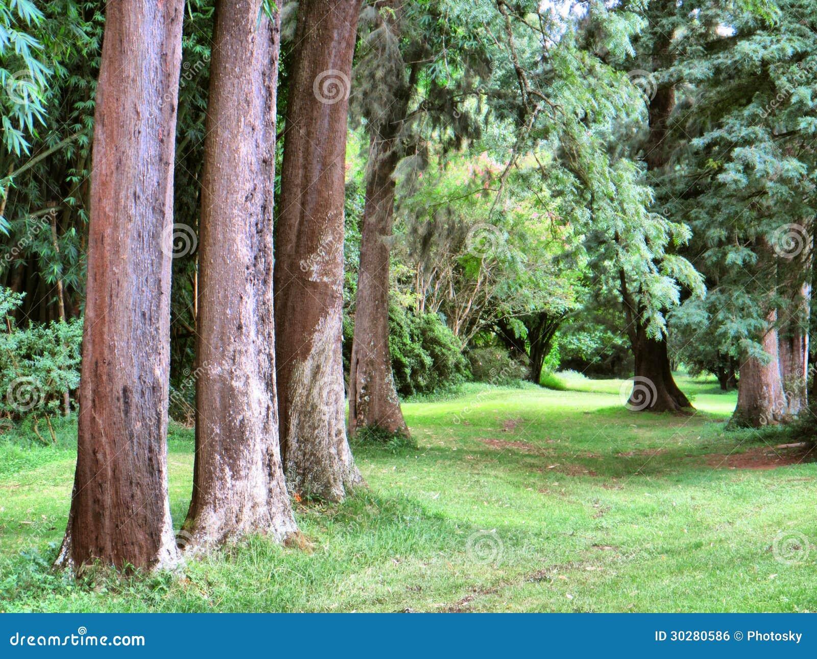 形成透视的树线