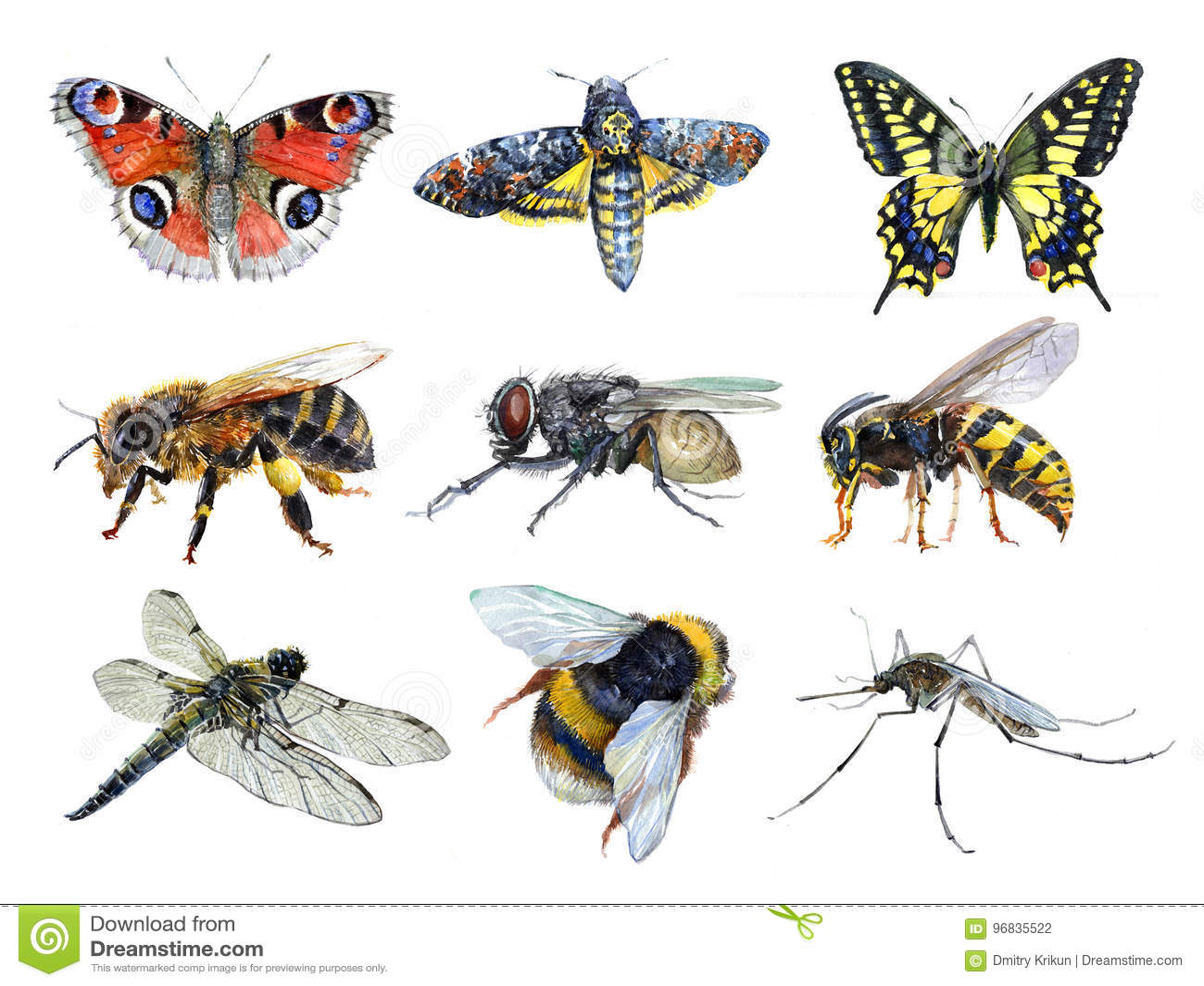 水彩套昆虫动物黄蜂,飞蛾,蚊子, Machaon,飞行,蜻蜓,土蜂,蜂,被隔绝的蝴蝶