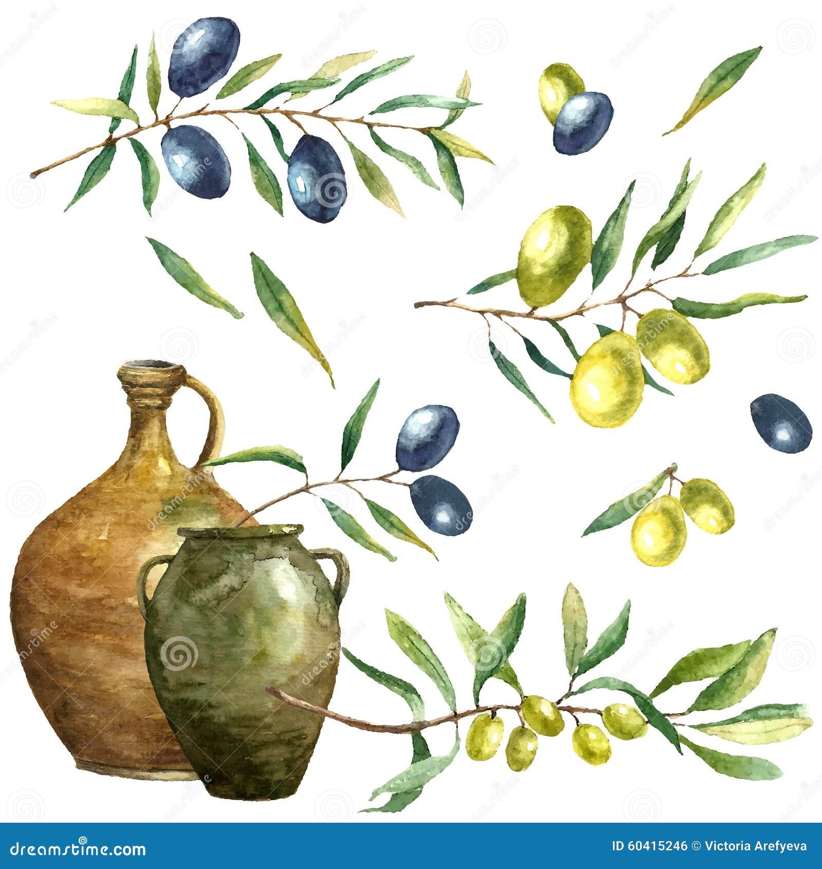 水彩橄榄树枝背景