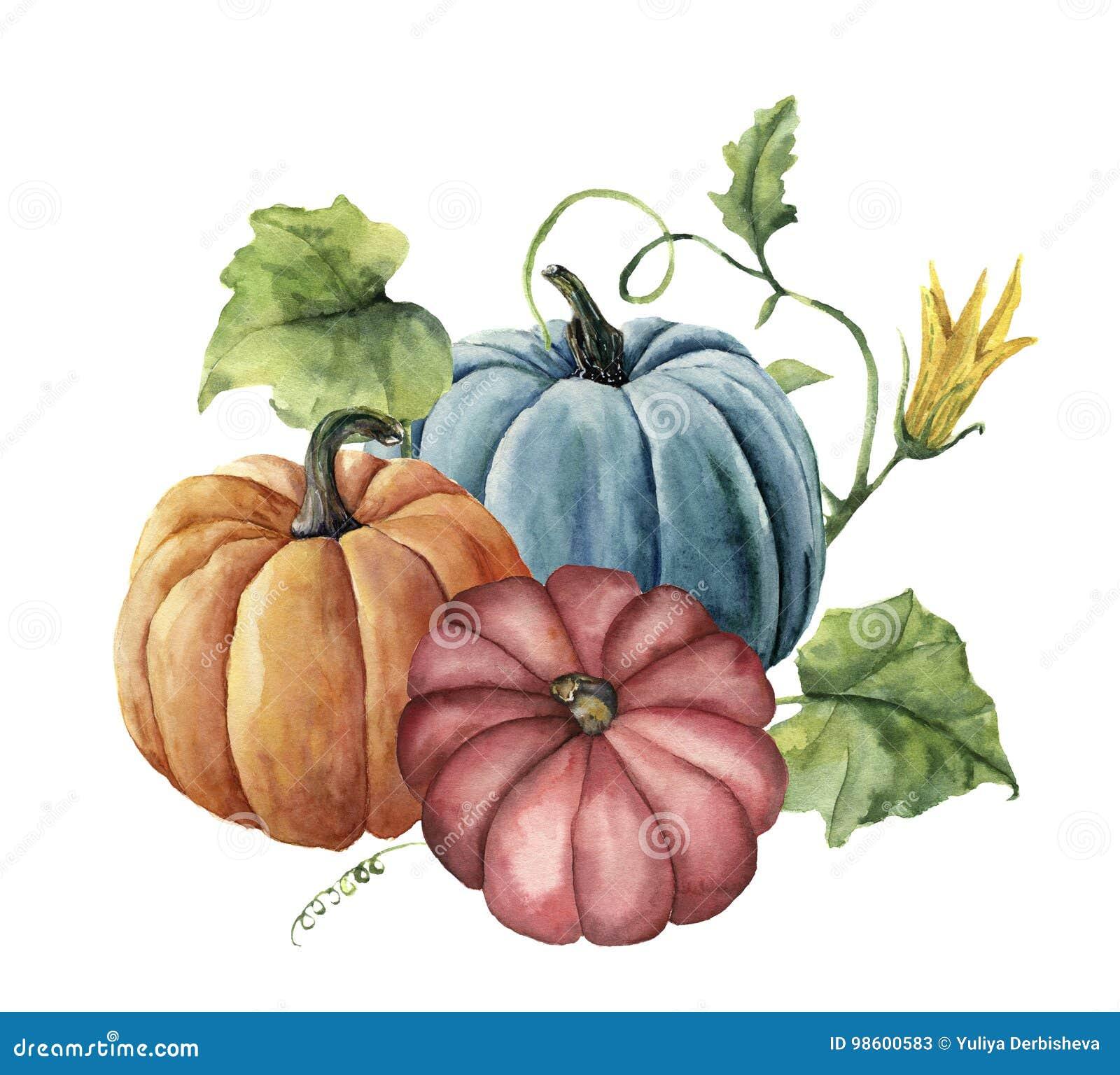 水彩秋天南瓜 与在白色背景和花的手画明亮的南瓜隔绝的叶子 玻色子