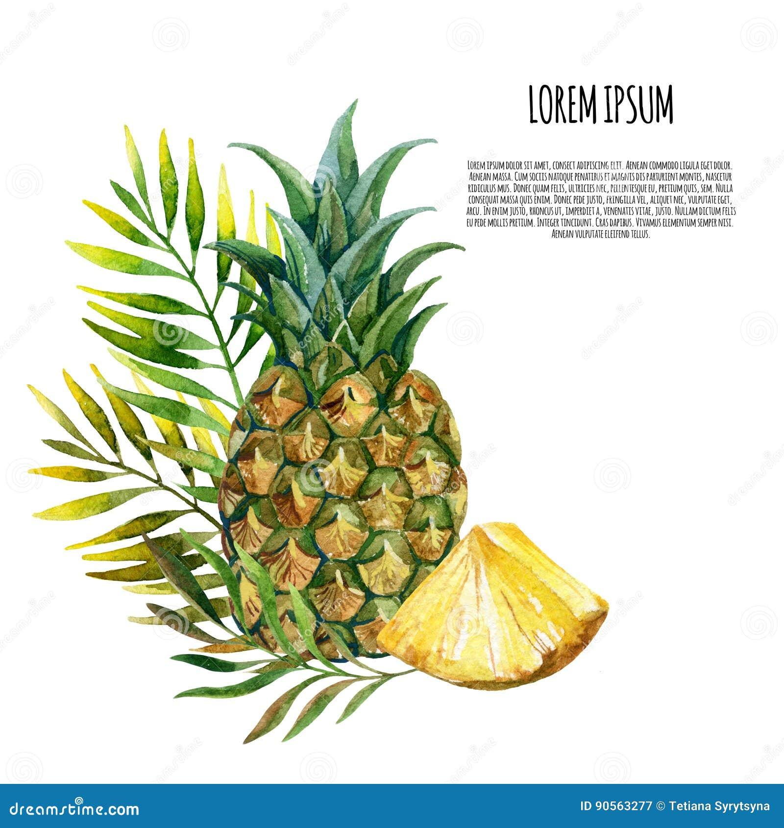 水彩菠萝集合