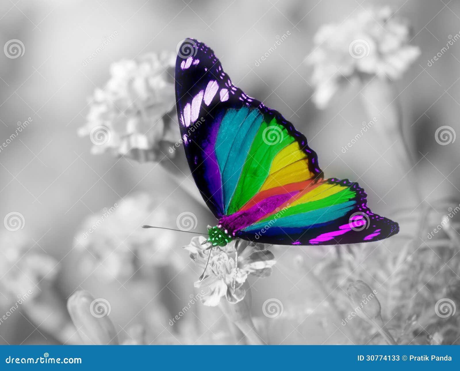 彩虹蝴蝶五颜六色的翼