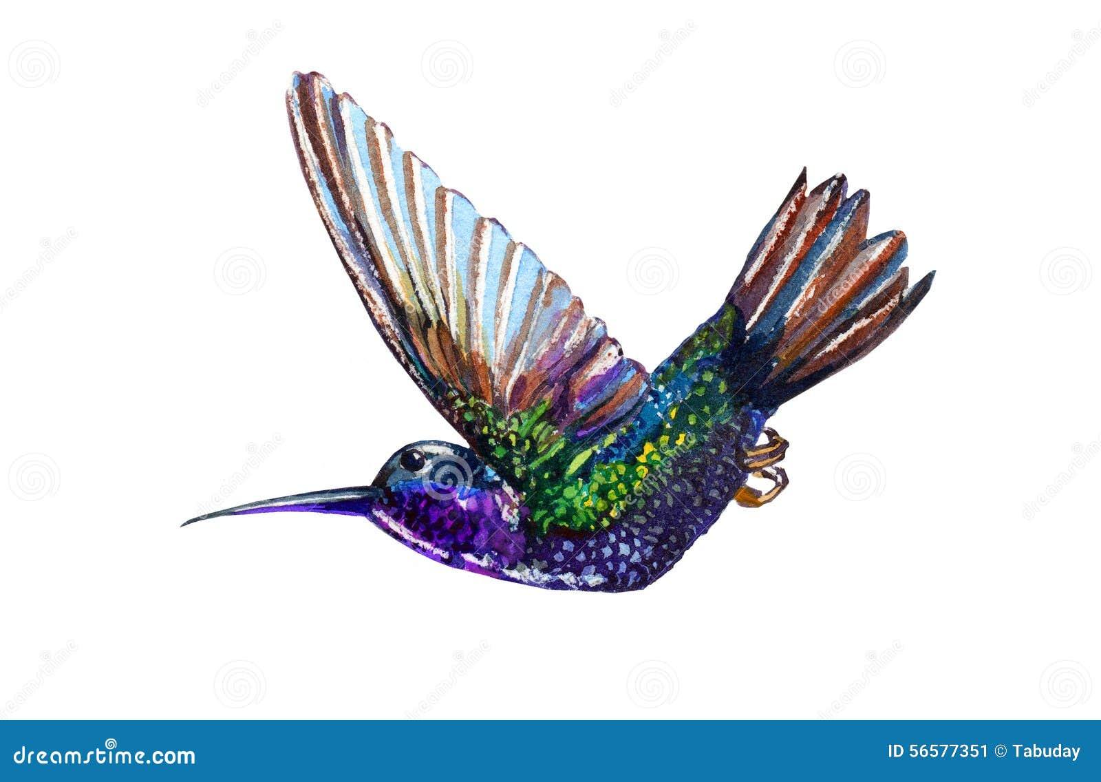 水彩情趣蜂鸟与衣老公图片
