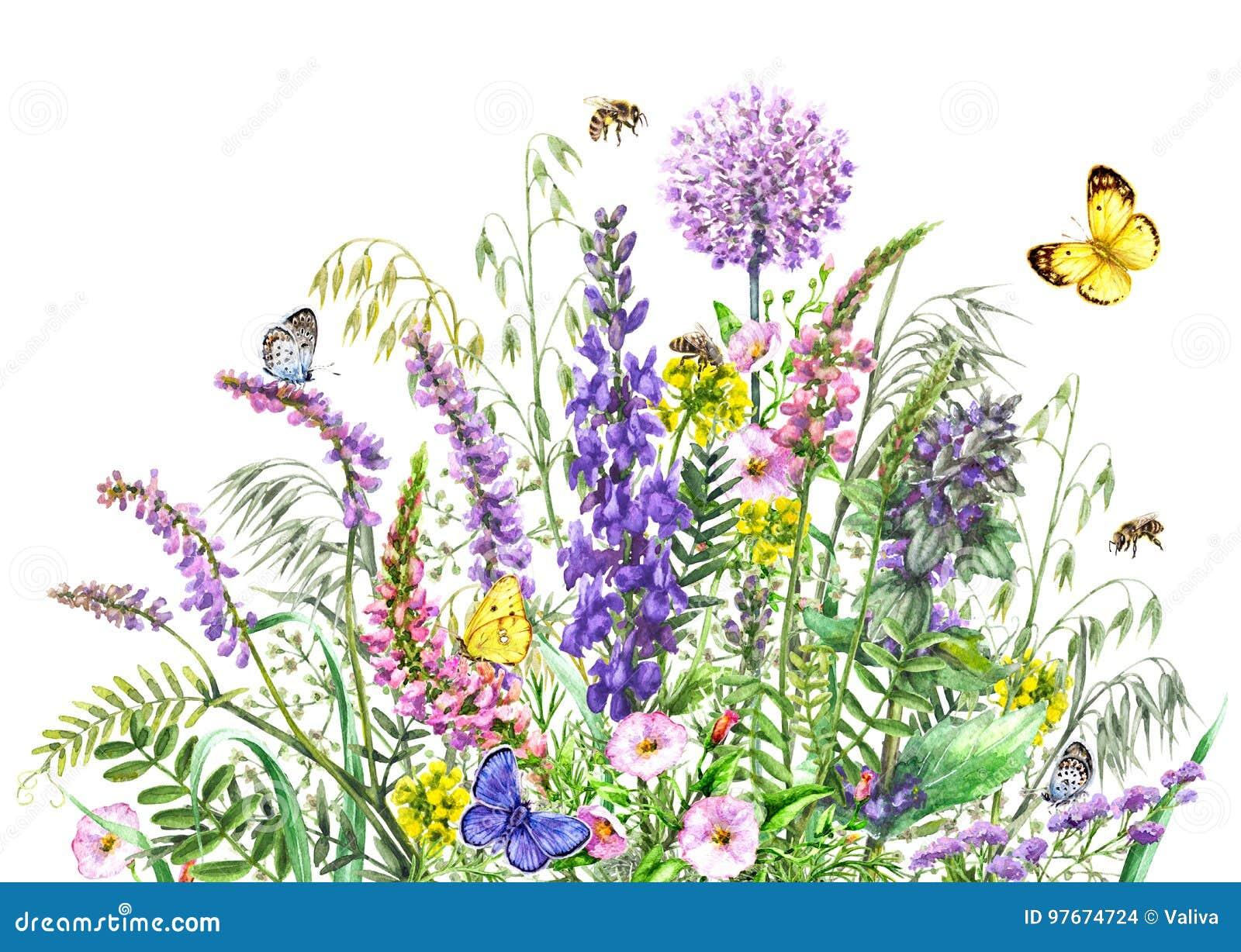 水彩野花和昆虫