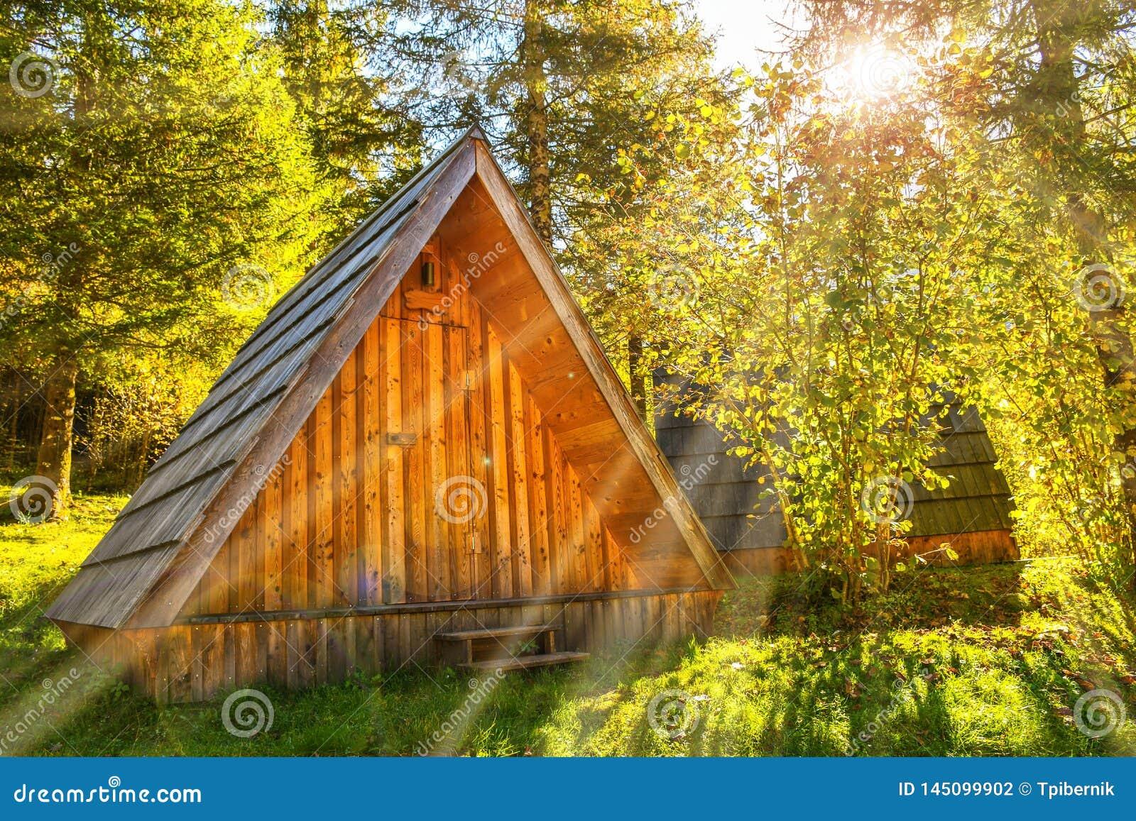 很远在一个深绿森林掩藏的小自然木房子在一晴朗的早晨天