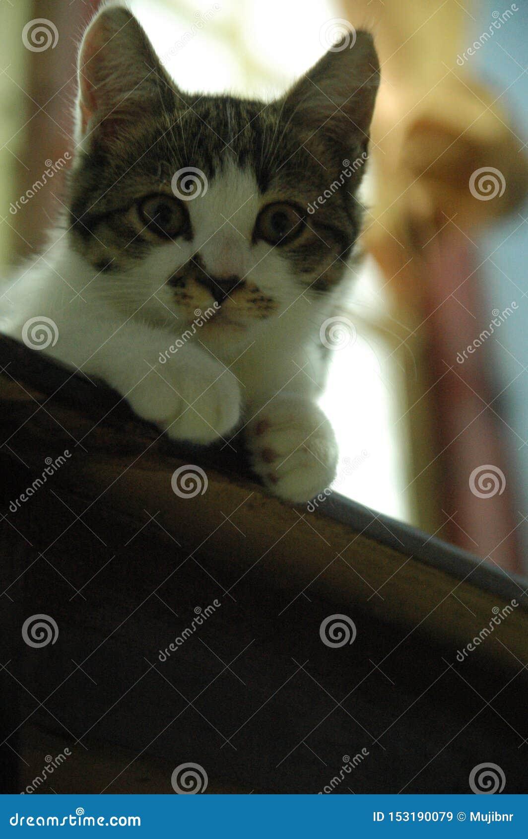 很逗人喜爱美丽的家猫-可爱的动物