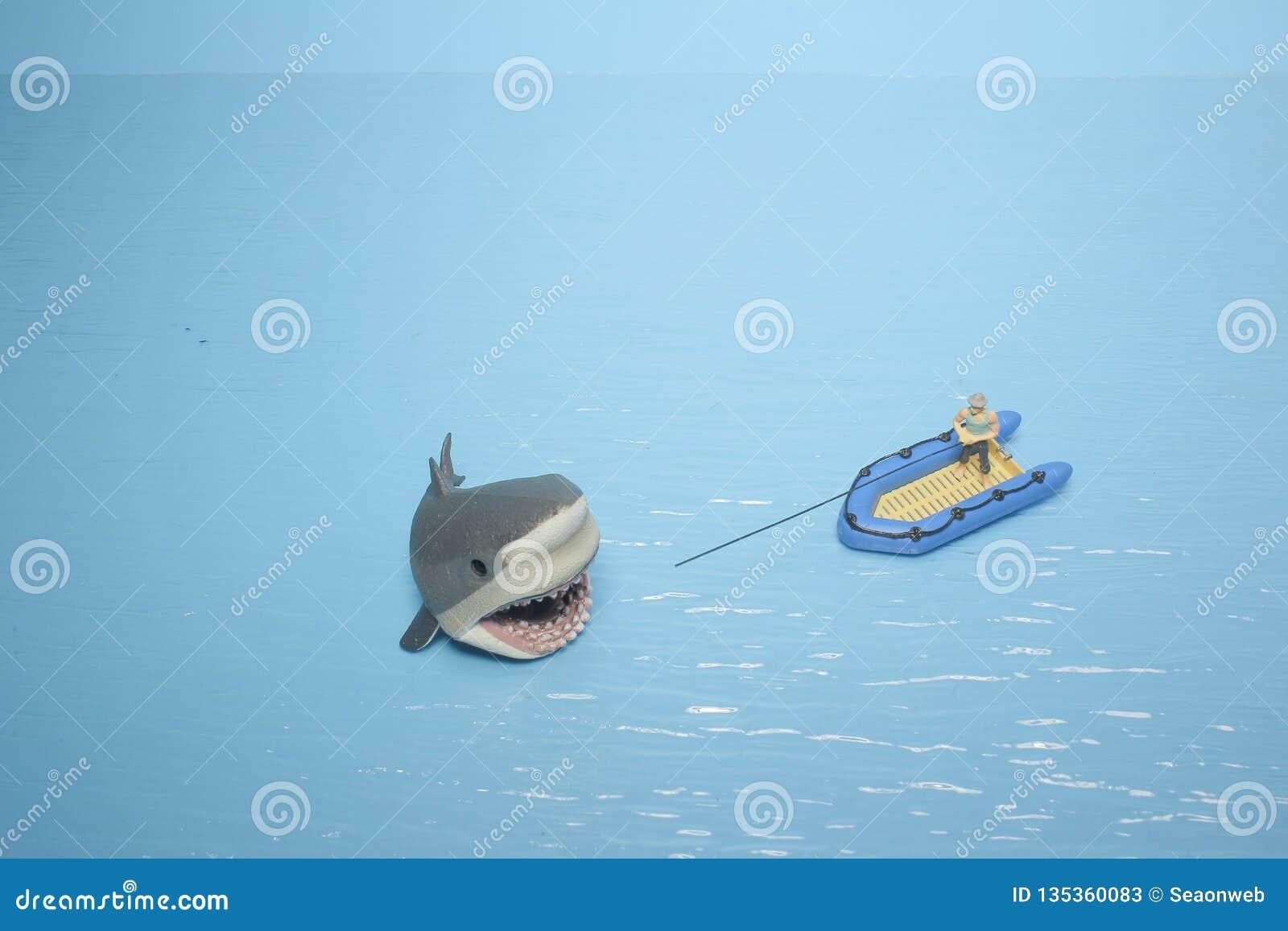 微型鲨鱼图乐趣