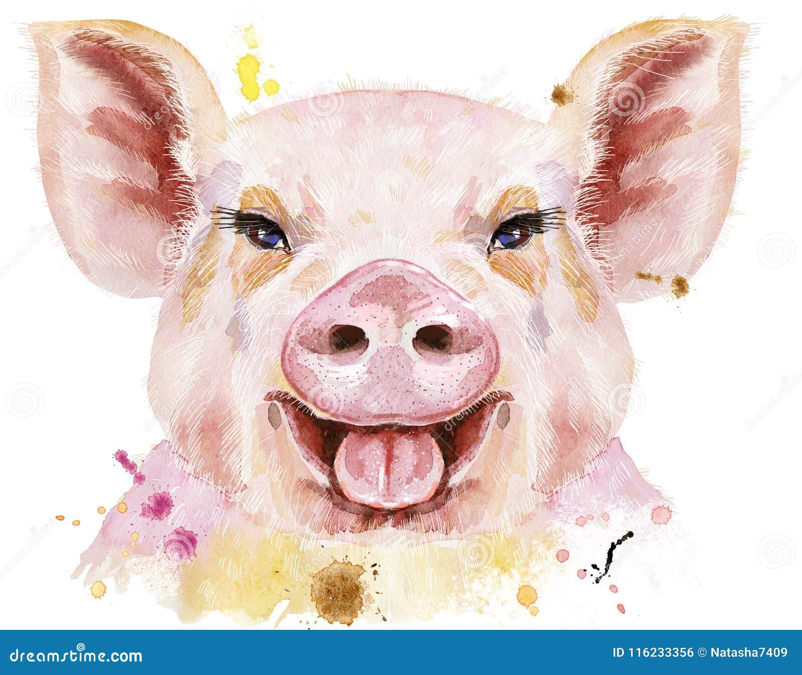 微笑的猪水彩画象图片