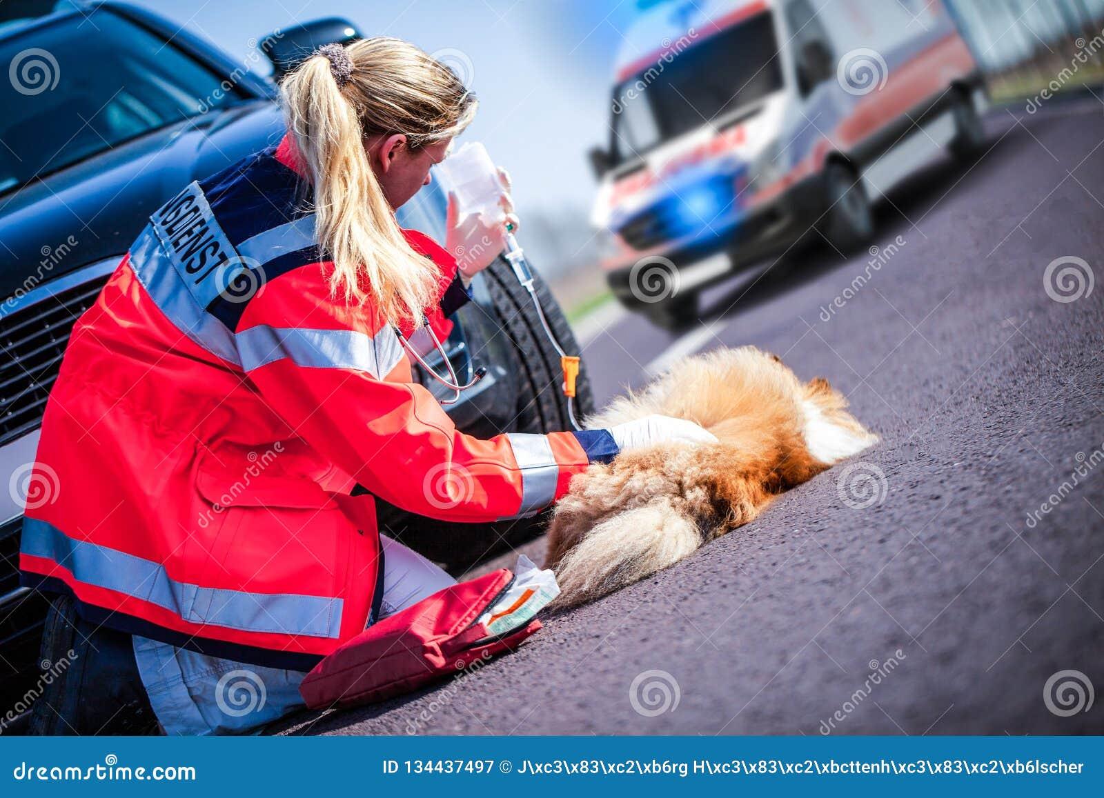 德国动物军医对待一条受伤的狗