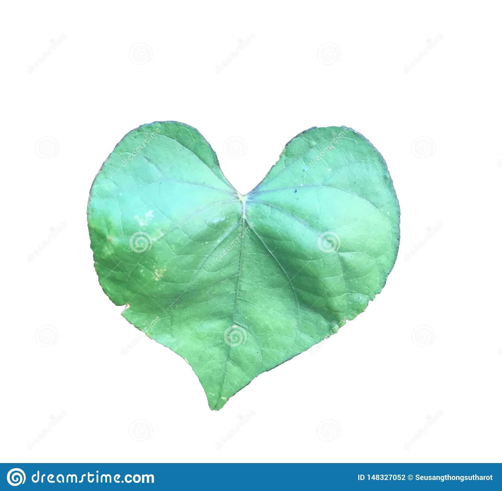 心形的叶子白色背景