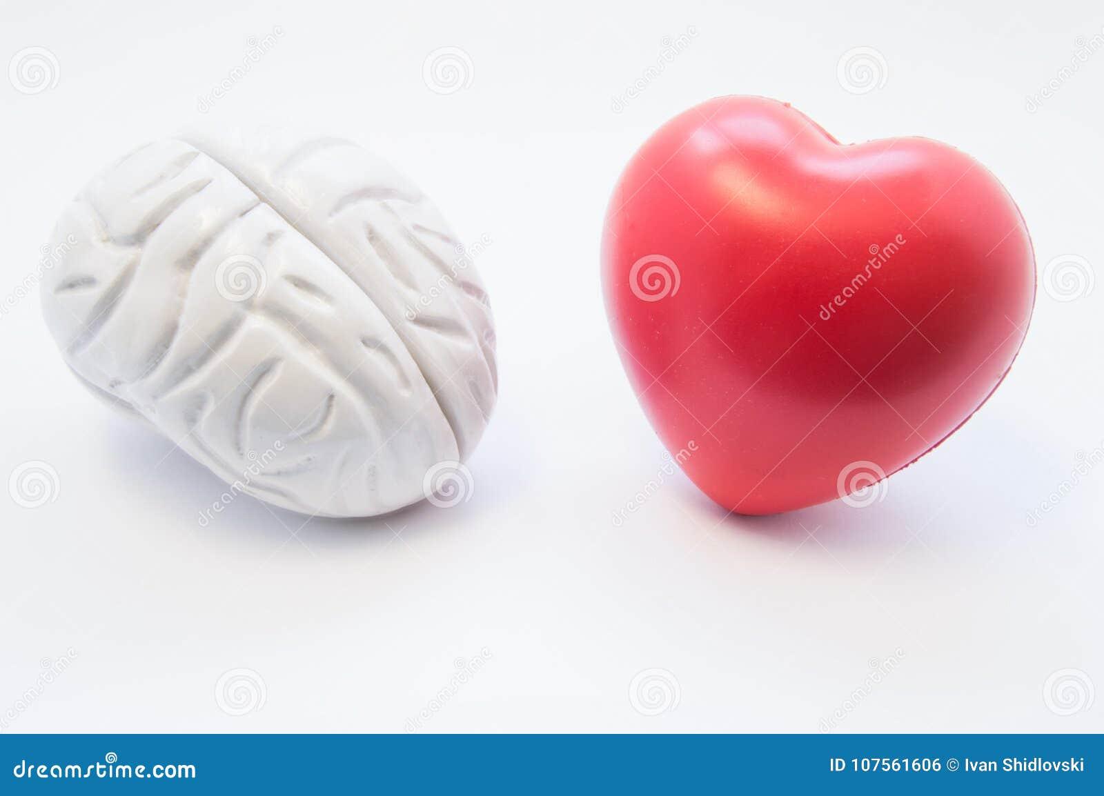 心脏和脑子形象在白色背景紧挨着说谎 连接的形象化脑子和心脏,选择之间的