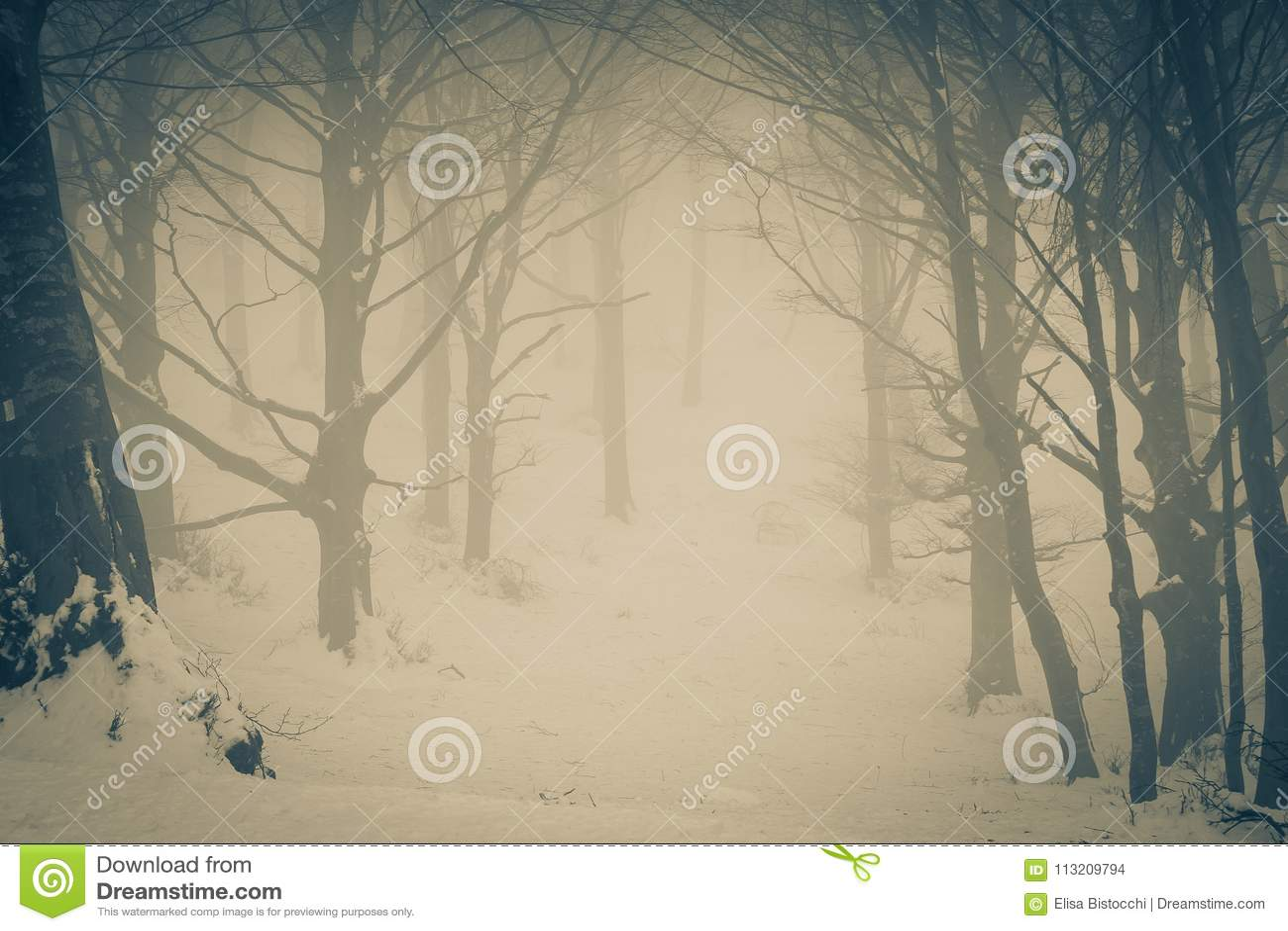 恐惧的隧道在狂放的森林里