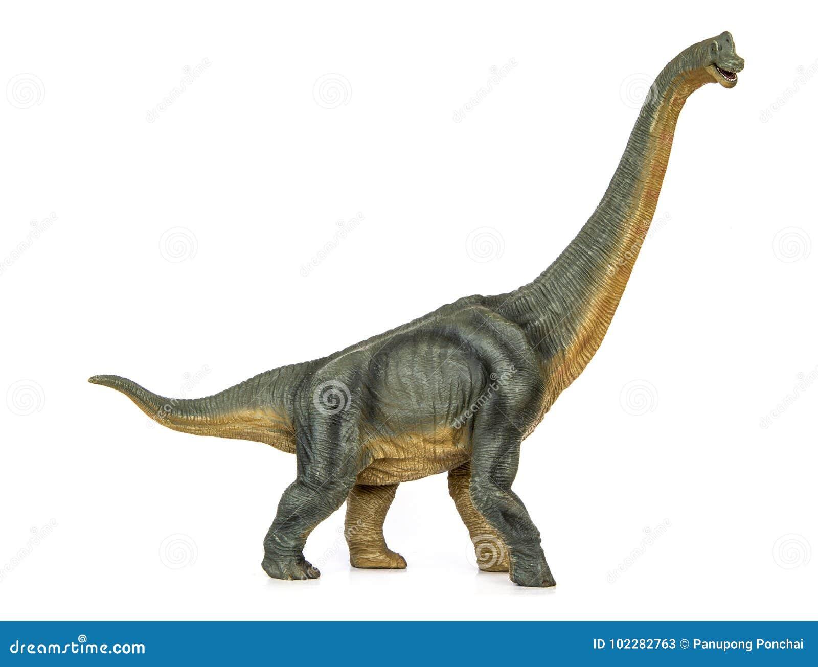 恐龙长的收缩的蜥脚类动物diermibot品种名字腕龙