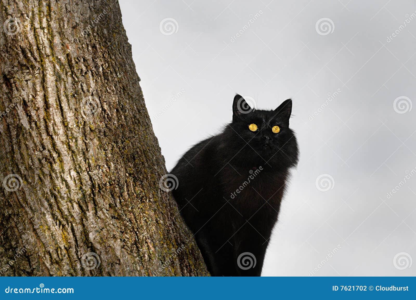 恶意嘘声被栖息的结构树