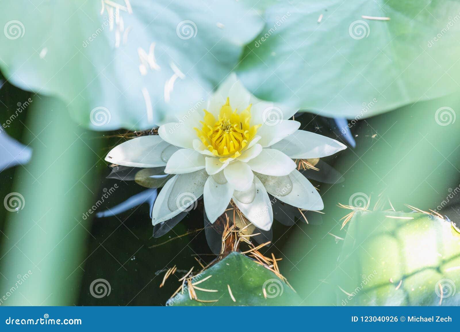 惊人的lilly浪端的白色泡沫特写镜头在夏天