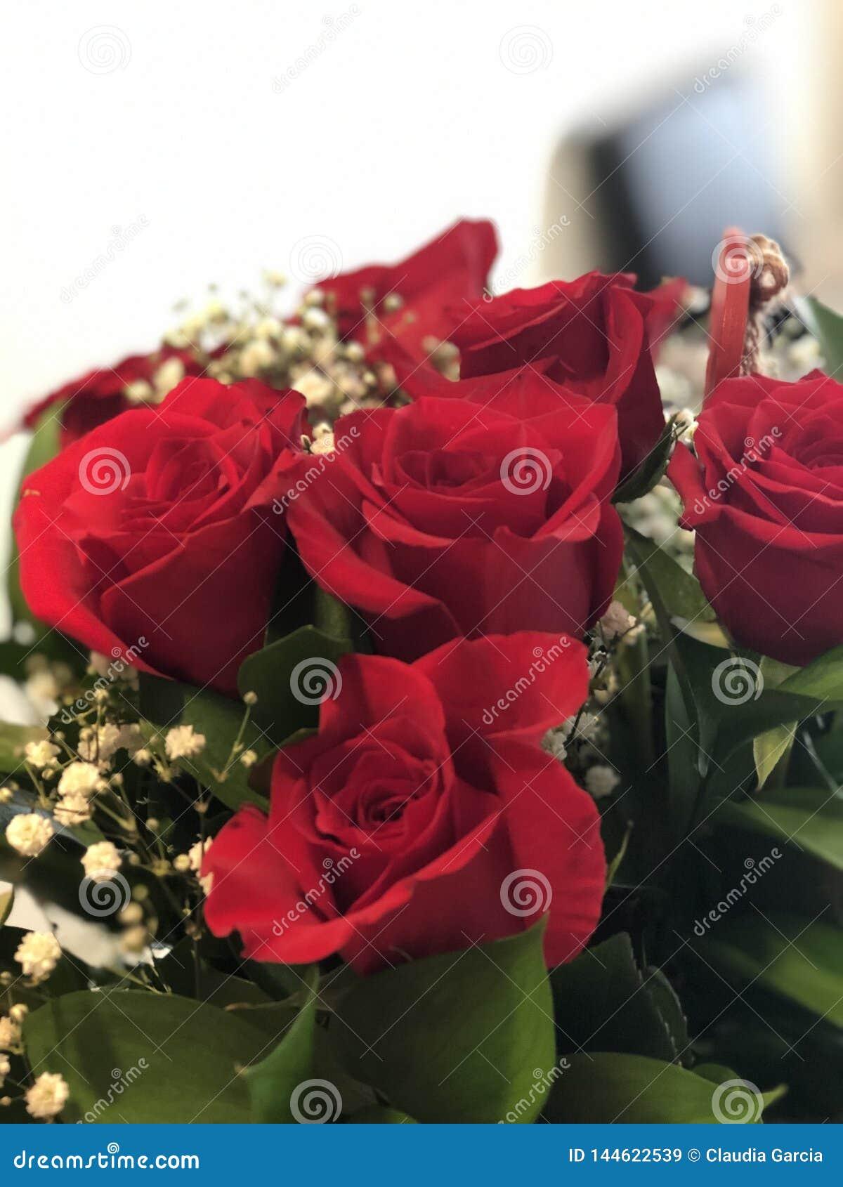 惊人红色Valentine's天玫瑰