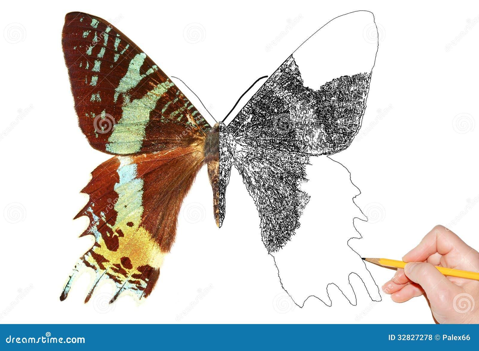 画蝴蝶的画家手.