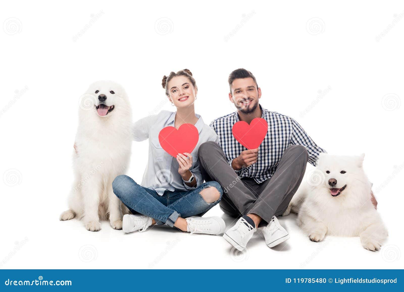 愉快的加上萨莫耶特人狗和纸心脏在白色,华伦泰