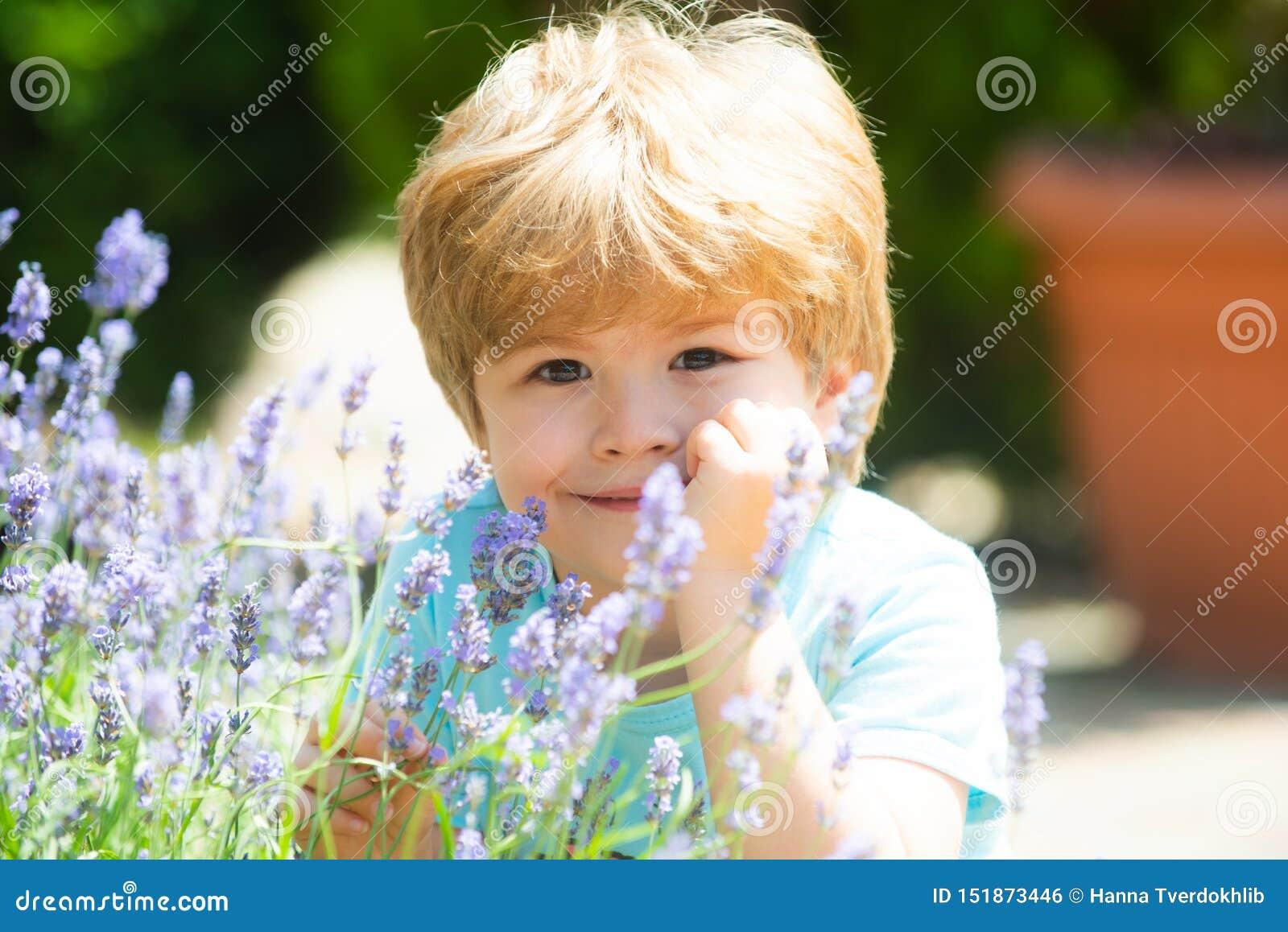 愉快的夏天男孩 孩子微笑 淡紫色领域的基于 r 新鲜的淡紫色气味 熏衣草属背景