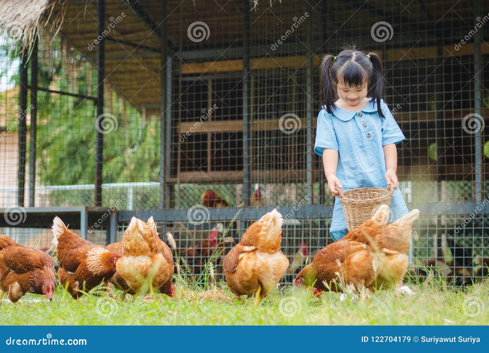 愉快的小女孩哺养的鸡在农场 种田,宠物, Ha