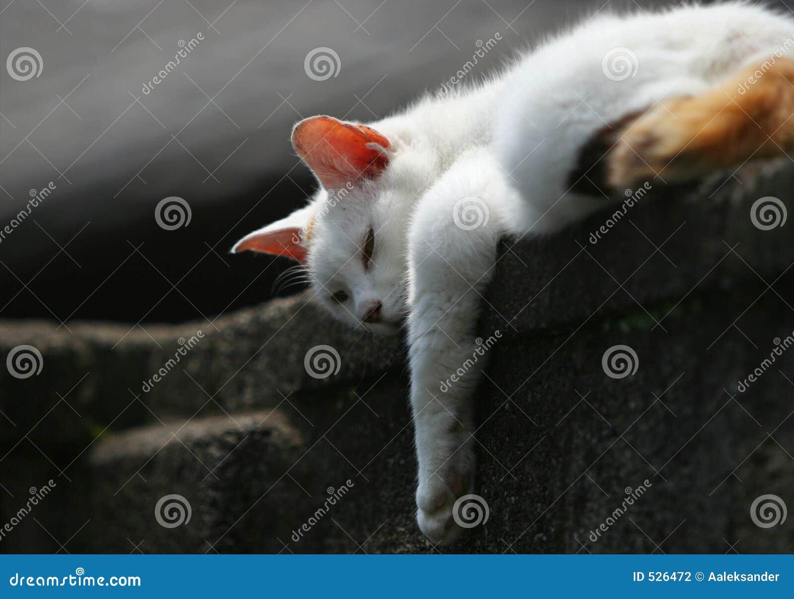 Download 懒惰象早晨星期天 库存照片. 图片 包括有 假寐, 打盹, 似猫, expertize, 倾斜, 耳朵, 丛生 - 526472